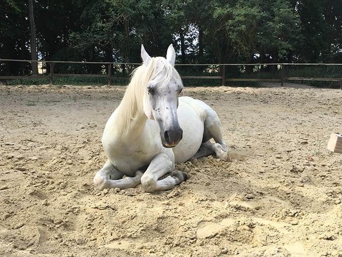 Zaki cheval du troupeau d'équicoaching