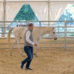 Développer l'assertivité avec  l'équi-coaching