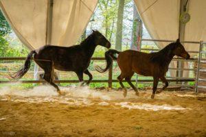 Equicoaching Pourquoi le cheval ?