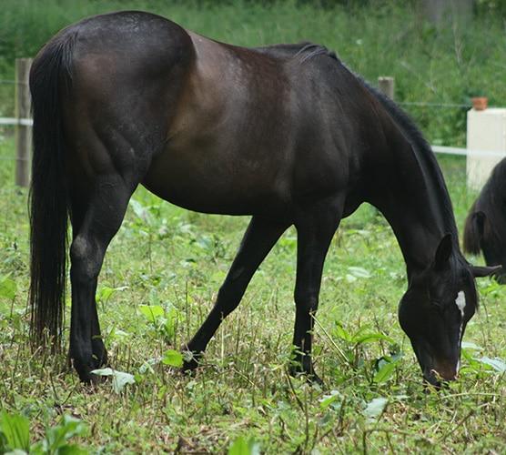 Ama cheval du troupeau d'équicoaching