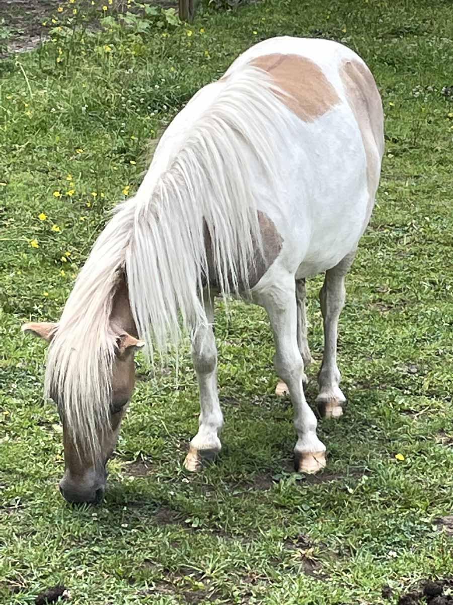 Virgule poney pour l'équicoaching