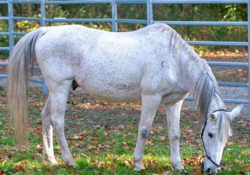 equicoaching cheval jupiter